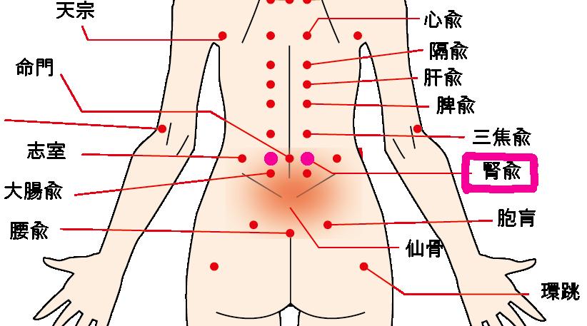 生理痛の辛い症状を緩和する:腰のツボ【腎兪】